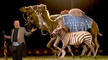 wild-animals-circuses