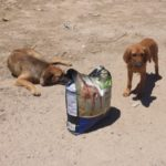 Urge Russian Govt to stop mass-killing of stray dogs ahead of FIFA2018