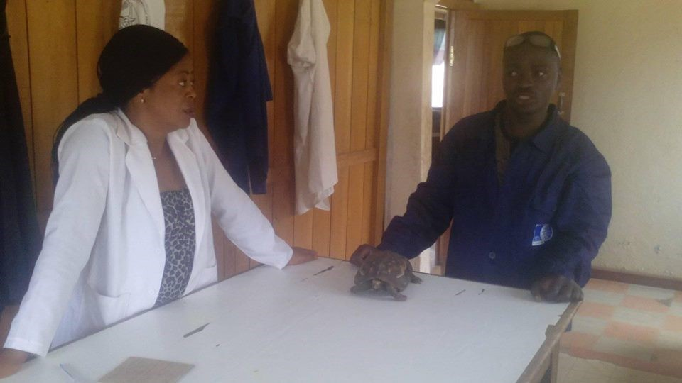 OIPA CAMEROON RESCUES A TORTOISE CAUGHT BY A LOCALLY MADE TRAP
