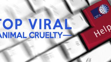 slider-viral1-1-5000x2000_c