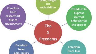 5-freedoms