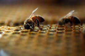 Grievance of OIPA India on Honey Bees