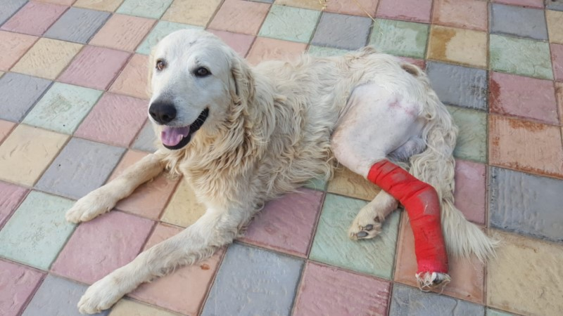 HIT BY A CAR AND ABANDONED ON THE HIGHWAY: BIANCO NEEDS ALL YOUR SUPPORT