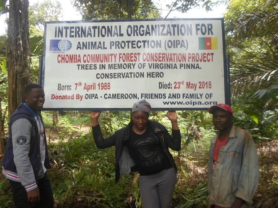 Virginia's Dream – Forest Conservation Project in Cameroon