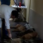 STOP MASS KILLING OF STRAY DOGS IN TIRANA! SIGN THE PETITION