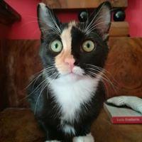 gatto-oipa-2