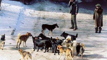 stray-dogs-in-russia