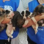 LAILA HAS BEEN ABANDONED AND THROWN ROCKS AT, SHE WAS RISK OF GIVING BIRTH TO HER NINE PUPPIES ON THE STREET: OIPA SYRACUSE'S BLUE ANGELS RESCUED HER BUT NOW SHE NEEDS YOUR HELP