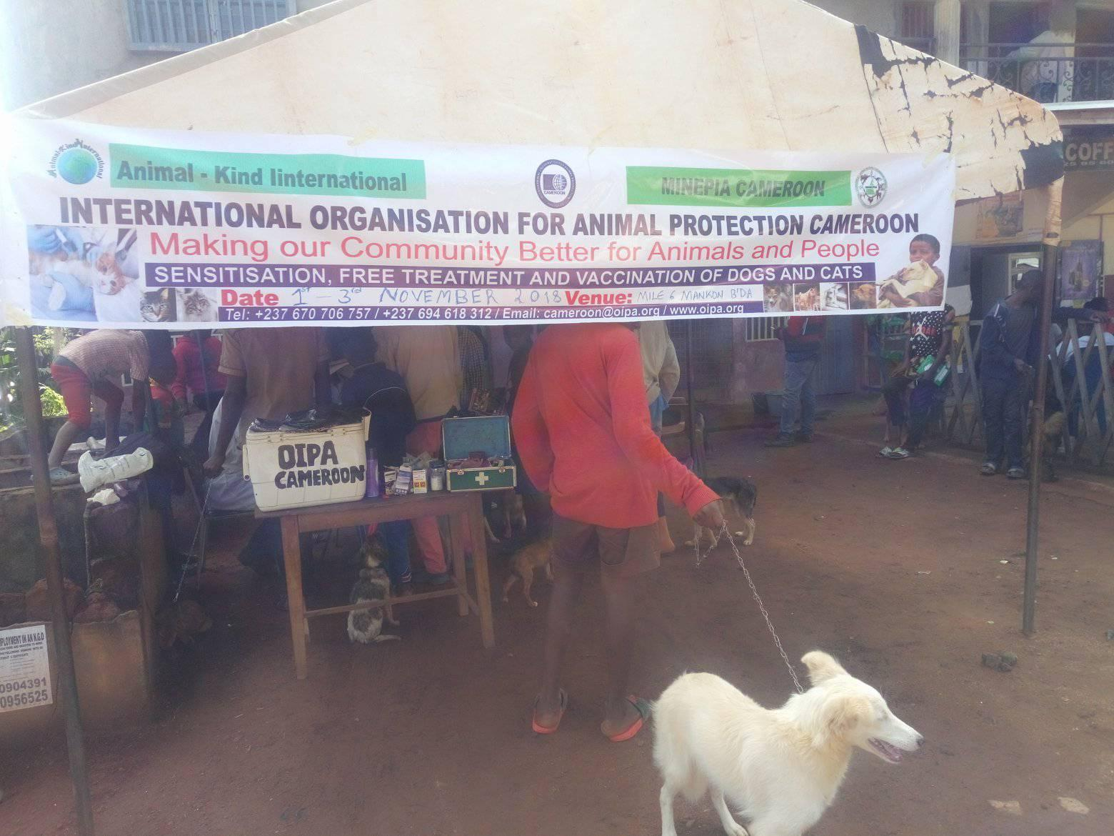 OIPA CAMEROON VACCINATES MORE THAN 100 DOGS AND CATS