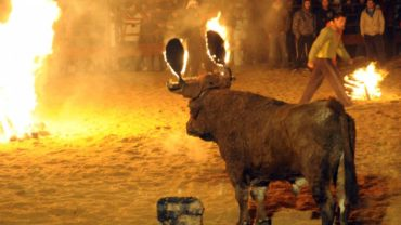 toro-de-fuego-2