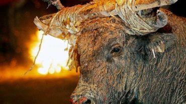 toro-de-fuego
