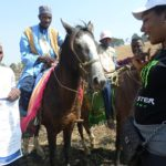 IMPROVING WORKING CONDITIONS OF HORSES AND DONKEYS IN CAMEROON
