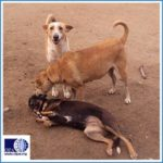 EGYPT'S STRAY DOGS MANAGEMENT: SOME GOOD NEWS
