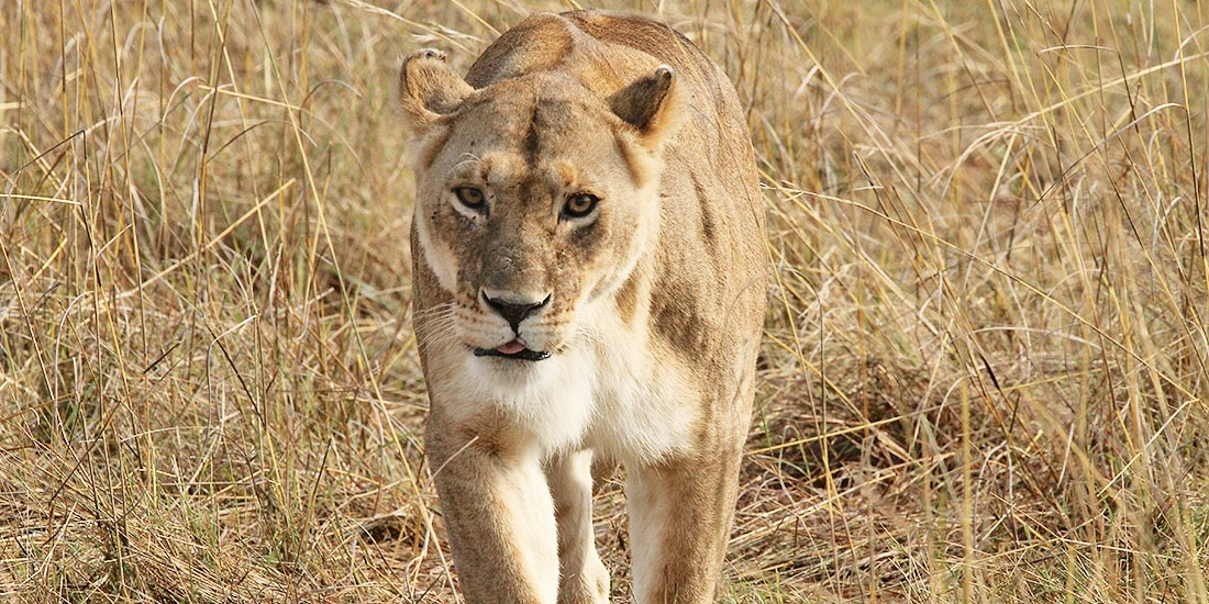 BLOOD LIONS – THE DOCUMENTARY