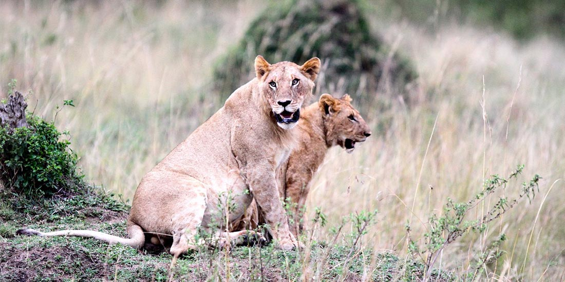 TROPHY HUNTING: KILLING FOR FUN…….