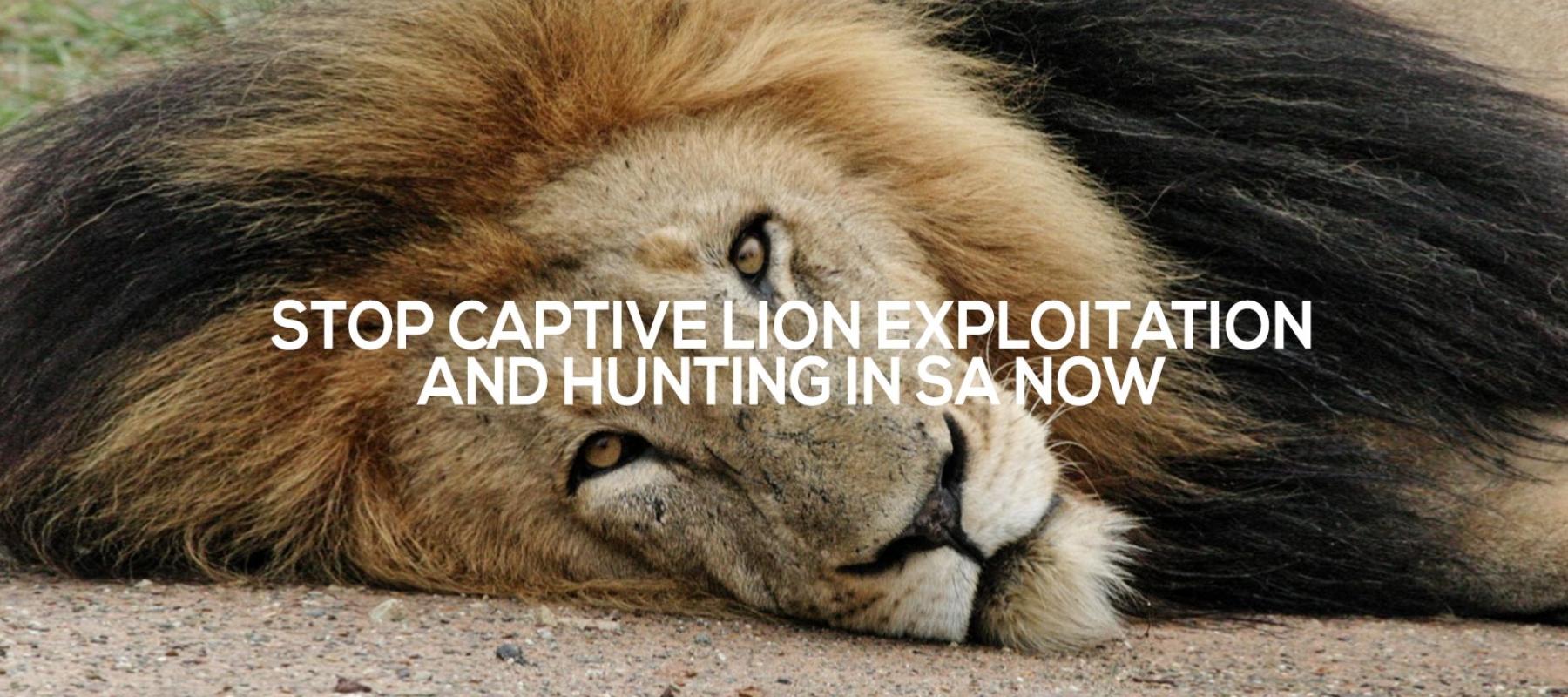slider-lions