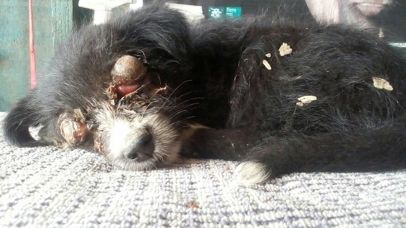 DRISTI, A BLIND DOG ABANDONED IN A NOODLES BOX IN NEPAL