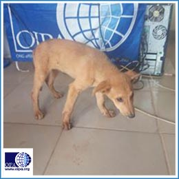 OIPA-CAMEROON IS PLEADING FOR DONATIONS TO HELP A POOR FAMILY KEEP THE RESCUED PUPPY THEY LOVE
