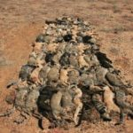 AUSTRALIA'S FERAL CATS WAR – SEND A LETTER OF PROTEST