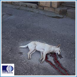 AZERBAIJAN: THE SLAUGHTER OF STRAY DOGS CONTINUES
