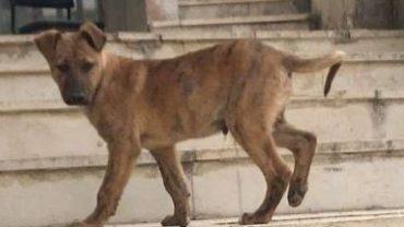 palestine-dogs3