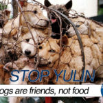 LITTLE MUSINGS ABOUT YULIN FESTIVAL
