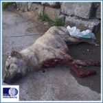 AZERBAIJAN:  STOP MASS KILLING OF STRAY DOGS! Sign the petition!