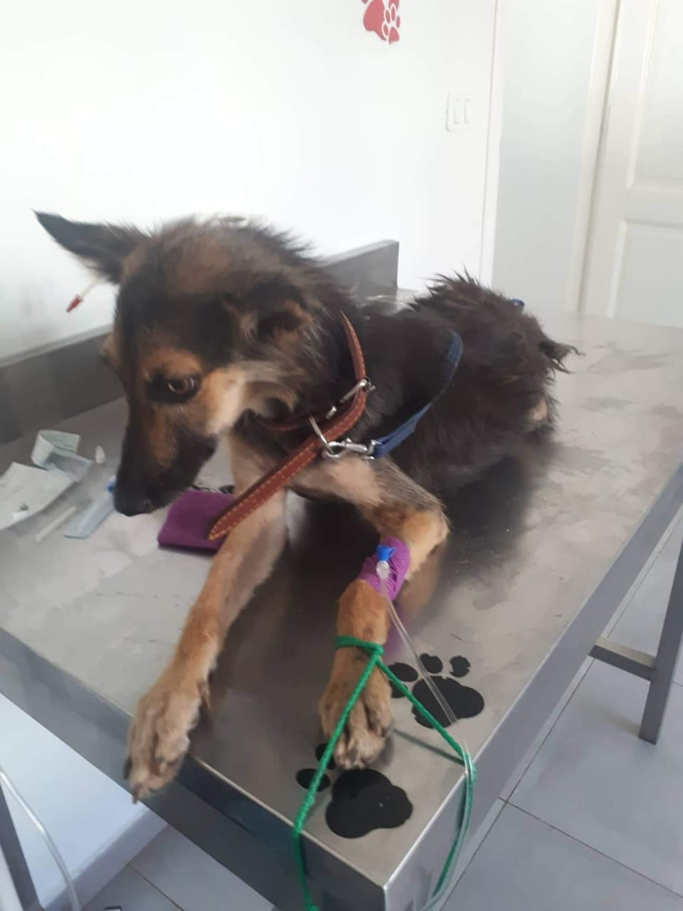 RESCUING INJURED DOGS IN TUNISIA
