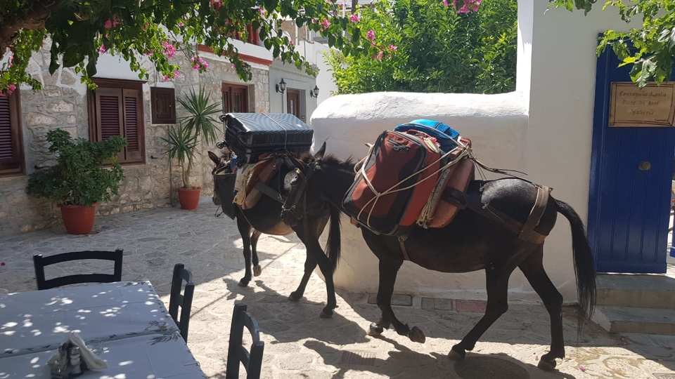THE UGLY SIDE OF GREEK ISLANDS – DONKEYS USED AS TAXIS FOR LAZY AND OVERWEIGHT TOURISTS