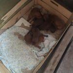 palermo-mamma-e-cuccioli-19-1600x1200-150x150