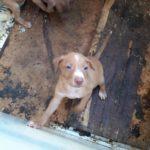 palermo-mamma-e-cuccioli-28-1600x1200-150x150