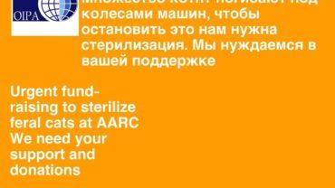 azer-feral-cats