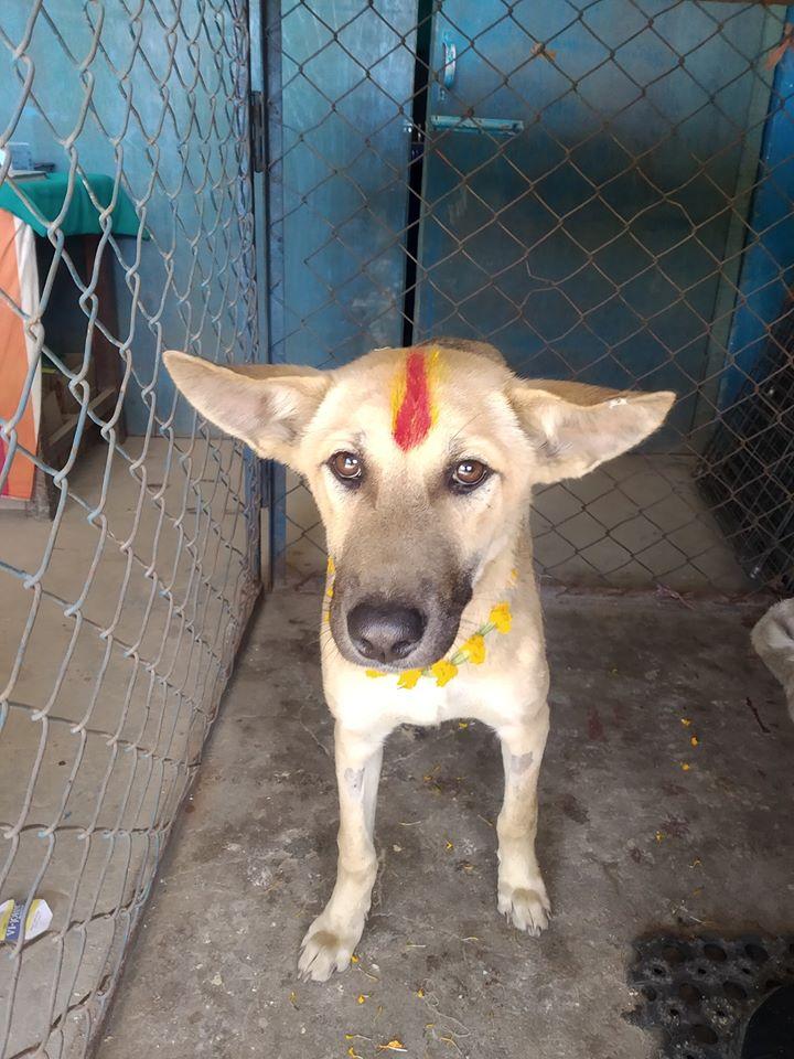 TIHAR, A NEPALI FESTIVAL THAT CELEBRATES ANIMALS