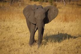 Zimbabwe: elephants and humans waiting for the rain