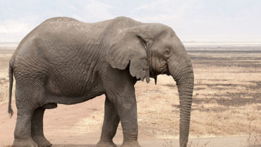 elephant-2-2