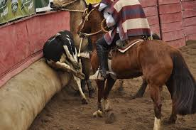RODEOS IN CHILE: A TRADITIONAL FORM OF CRUELTY TO ANIMALS