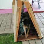 CHILE PROTESTS: OIPA RESCUES THE MOST VULNERABLE DOGS
