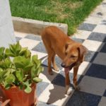 JOY, MICKY AND SAMI: THREE NICE DOGS RESCUED BY OIPA IN TUNISIA