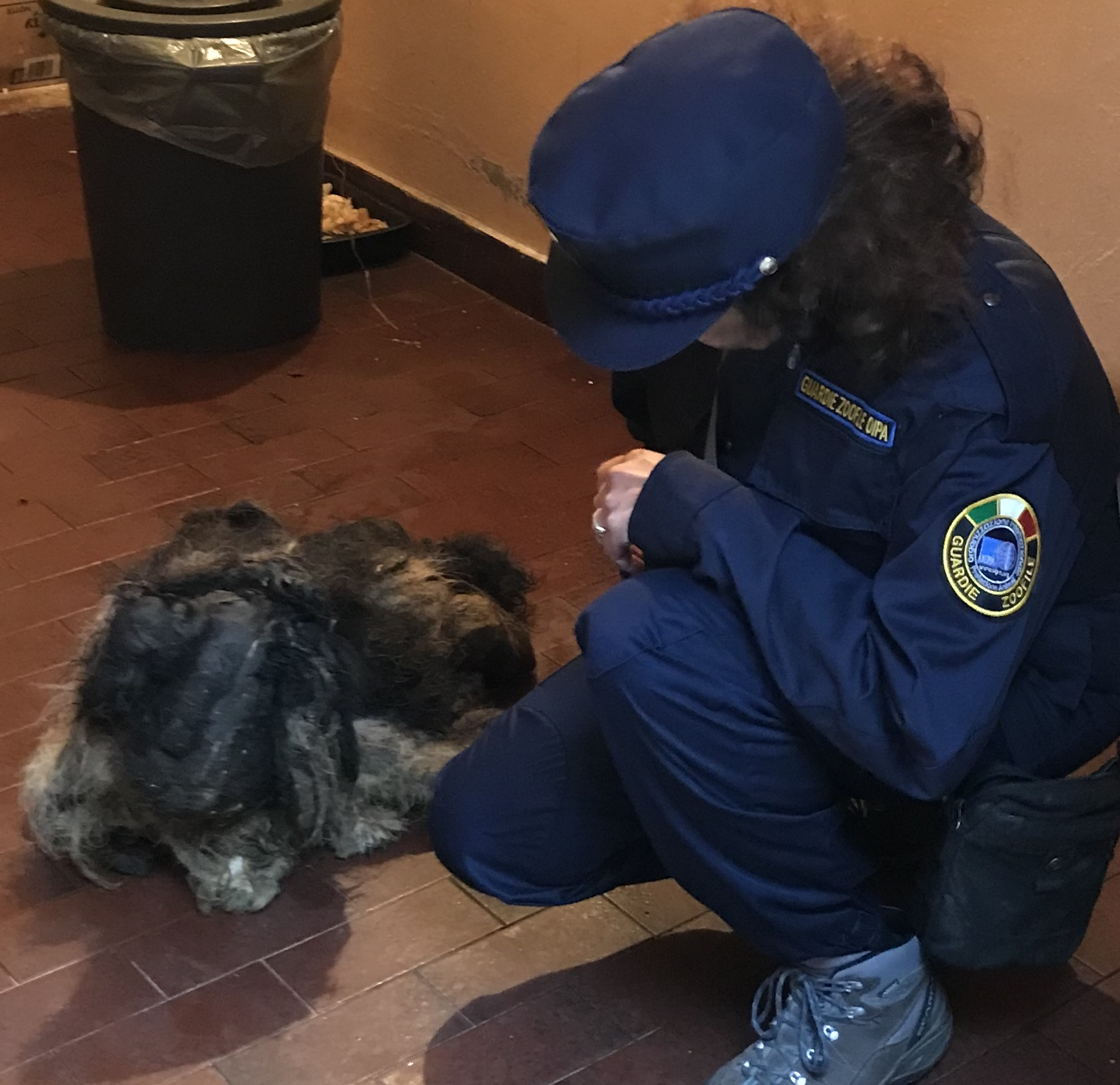 LOCKED IN A DARK GARAGE, ENTIRELY COVERED WITH LAYERS OF DIRT, FECES AND HAIRS: THE OIPA BRESCIA ANIMAL CONTROL OFFICERS SEIZED AN ELDERLY DOG