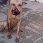 THE RESCUE AND NEUTER CENTER THAT WAS SUPPOSED TO TAKE CARE OF AZERBAIJANI STRAY DOGS IS ACTUALLY KILLING THEM