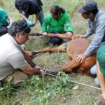 FIRST OIPA CHILE ANIMAL RESCUE TRAINING FOR VOLUNTEERS