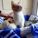WESLEY WILL NOT BE ABLE TO SEE THE WORLD, BUT NO ANIMAL IS INVISIBLE TO OIPA'S VOLUNTEERS