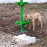 VUSHTRRI, KOSOVO: WATER AND FOOD STATIONS FOR STRAY DOGS