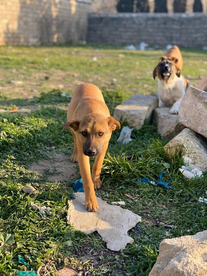 AZERBAIJAN IS KILLING STRAY DOGS, CAN YOU HELP OIPA INTERNATIONAL PROTECT THEM?