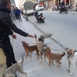 OIPA NEPAL AND NAWRC BRING COMPASSION AND CARE FOR ANIMALS