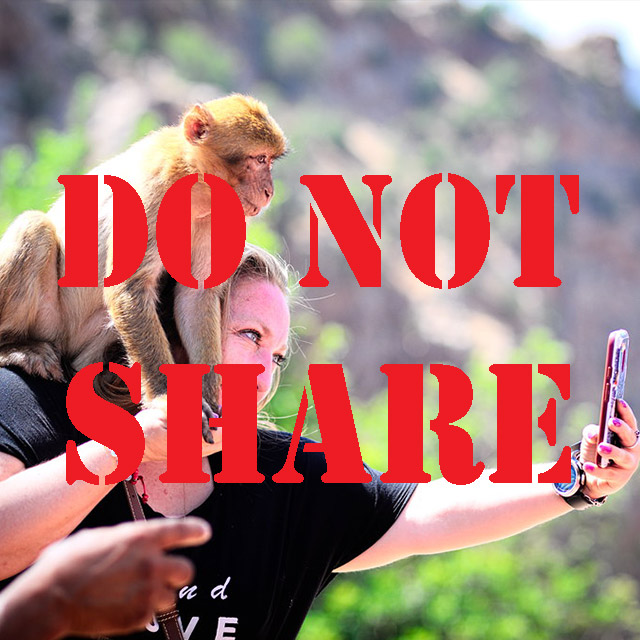 HOW SHARING VIDEOS AND PHOTOS OF WILD ANIMALS INTERACTING WITH PEOPLE IS PUTTING THEM IN DANGER – PART 2