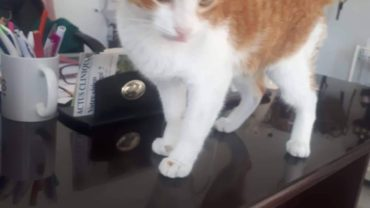 tunisie-cat2