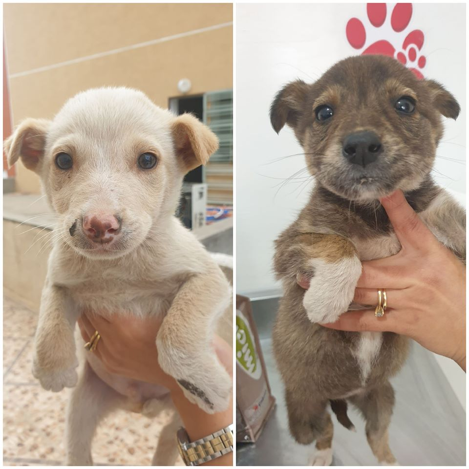 TWO ADORABLE PUPPIES AND A KITTEN SAVED BY OPIA TUNISIE FIND A FOREVER HOME