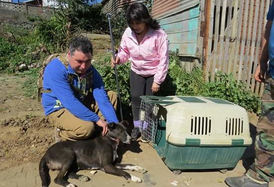OIPA CHILE IS READY TO ORGANIZE A NEW ANIMAL RESCUE TRAINING AND LOOKS FOR HIGHLY MOTIVATED VOLUNTEERS