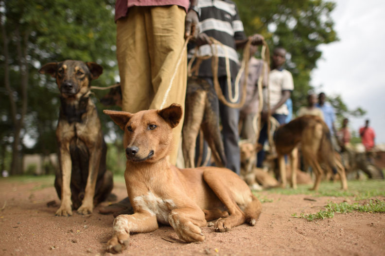 OIPA KENYA LAUNCHES A NEW AMBITIOUS PROGRAM: ANTI-RABIES VACCINATIONS AND SPAY/NEUTER ASSISTANCE